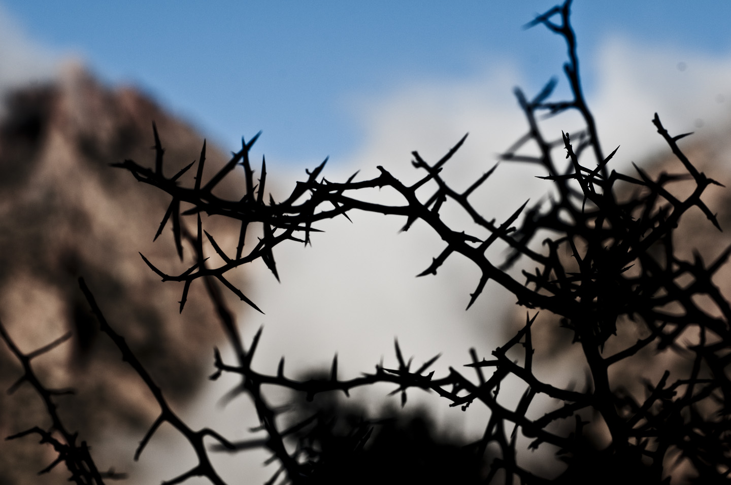 More thorns, Texas. Photo: Tony Carnes/A Journey through NYC religions