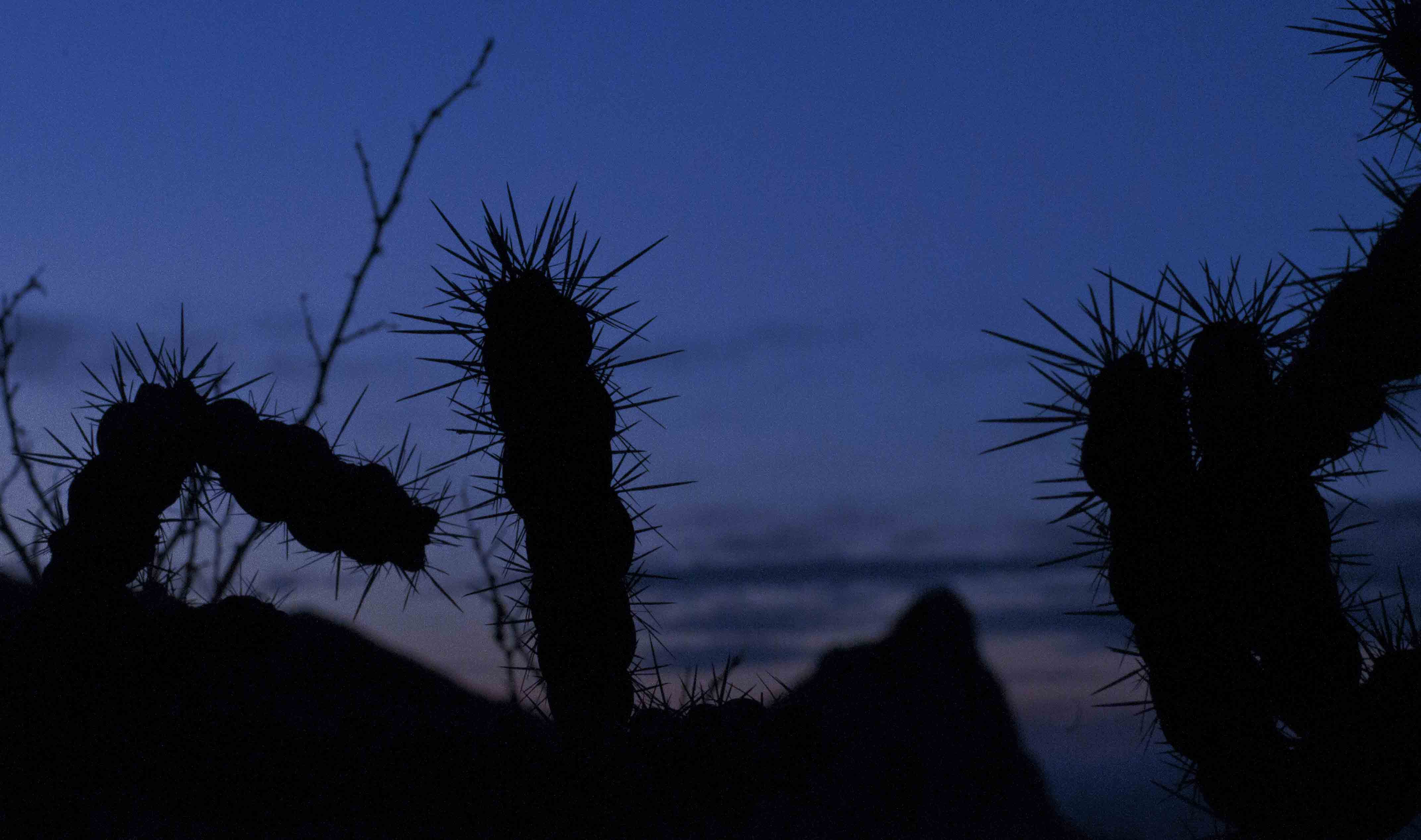 Sun goes down, thorns wait for Javi at night on Texas border with Mexico. Photo: Tony Carnes/A Journey through NYC religions